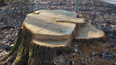Baumstumpf an einer Straße