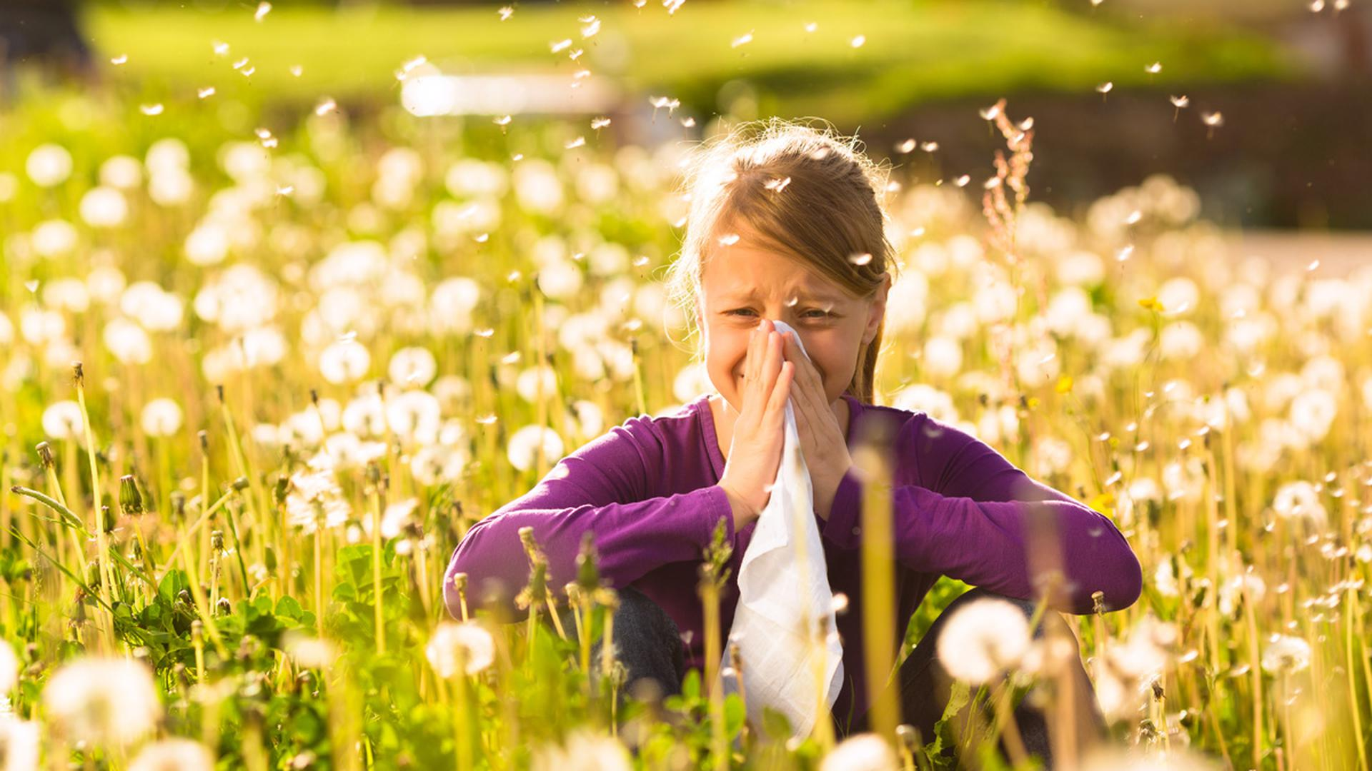Die Pollen fliegen wieder