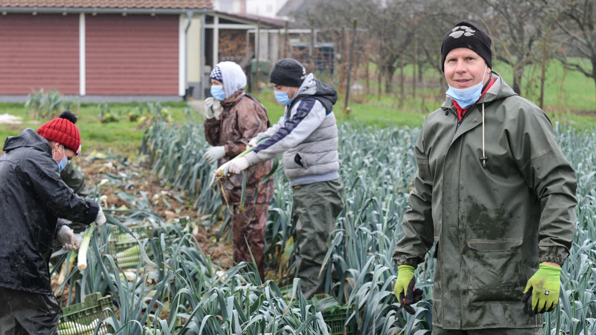 Markus Schindler mit seinen Erntehelfern aus Rumänien bei der Lauchernte in Önsbach (8. Februar)