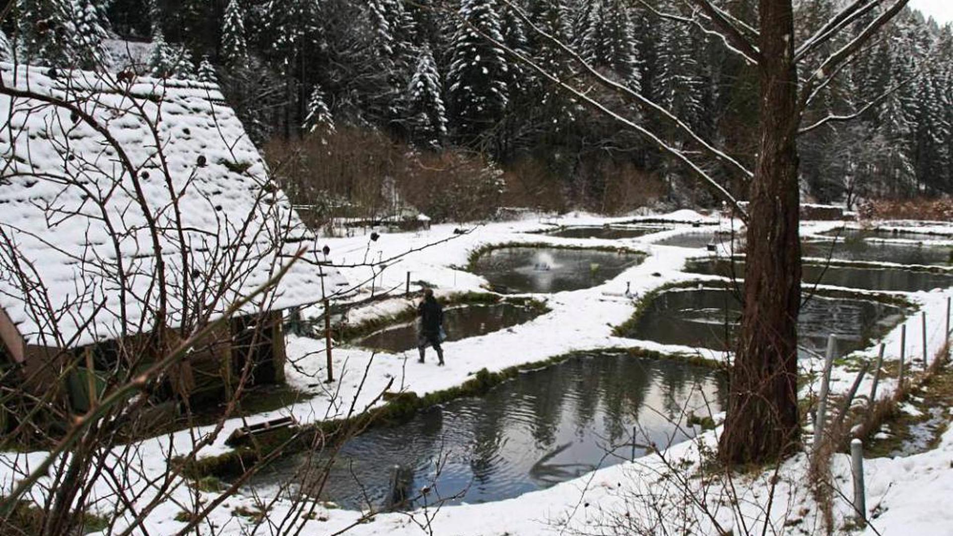 Die Fischzucht im Freudenstädter Stadtteil Christophstal ist im Besitz der Stadt. Sie wird Bestandteil der Gartenschau.