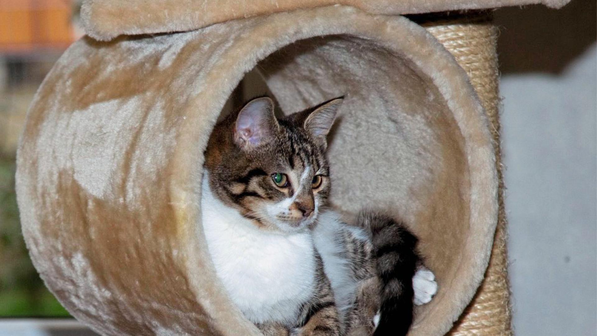 Wohlauf: Den Katzen des Tierschutzvereins in Achern geht es gut. Aber die Auffangstation wurde für die Öffentlichkeit vorübergehend geschlossen.