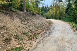 Maschinenweg im Wald in Oberachern