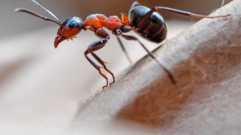 Tiere milder Winter Ameise
