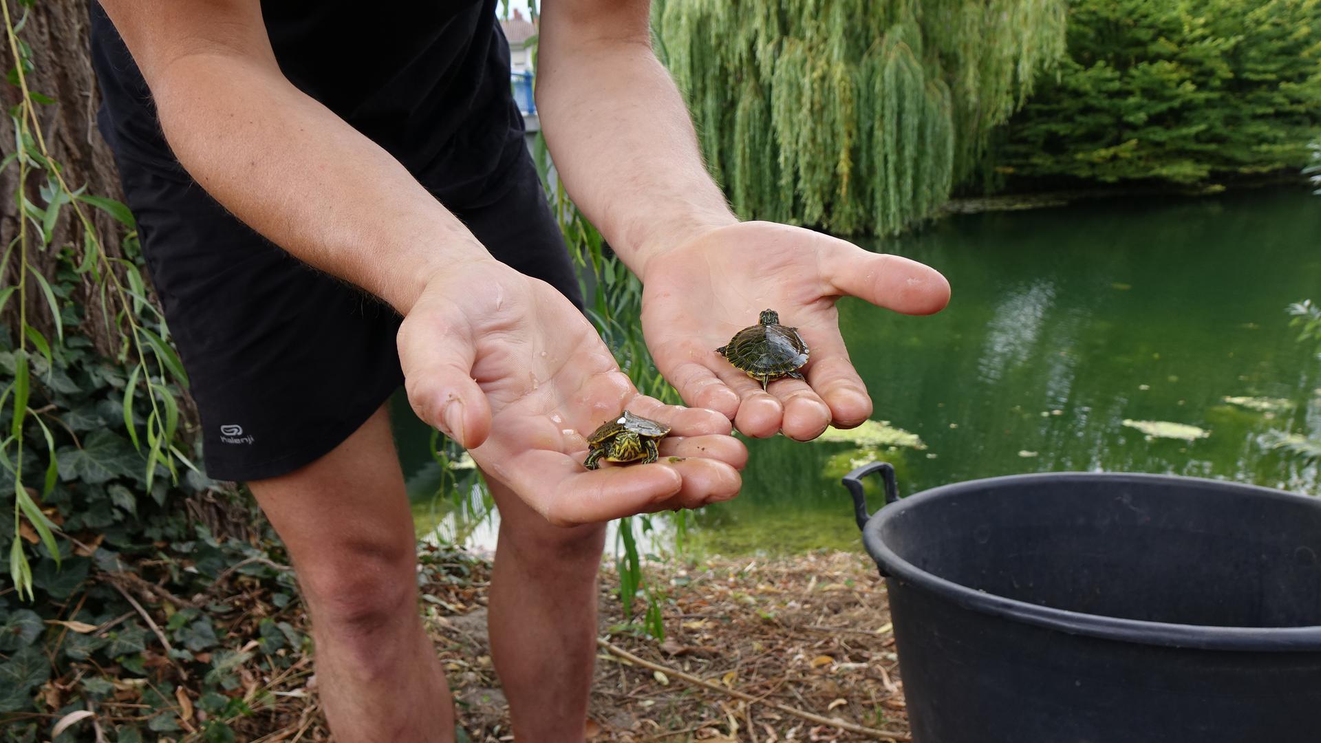 Die beiden Babyschildkröten haben eine aufregende Reise zu der Reptilienauffangstation in München vor sich.
