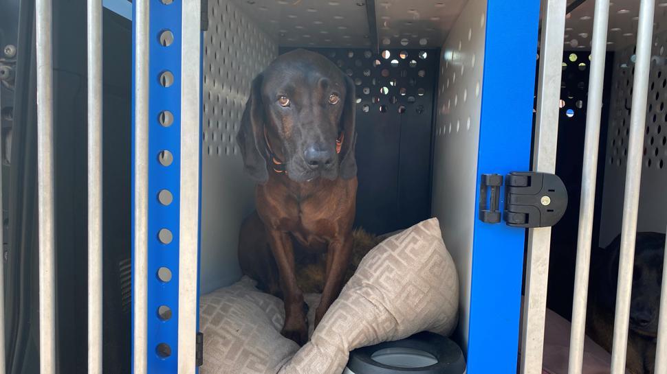 Ein Polizeihund sitzt in einer Transportbox