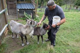Ein Mann hält Eimer in der Hand und begrüßt zwei kleine Rentiere auf einer Weide.