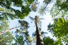 Baumkronen in einem Waldstück werden von der Morgensonne angestrahlt.