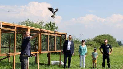 Der Zoo Karlsruhe wildert vom Aussterben bedrohte Kiebitze und Große Brachvögel im Bereich Rheinau aus