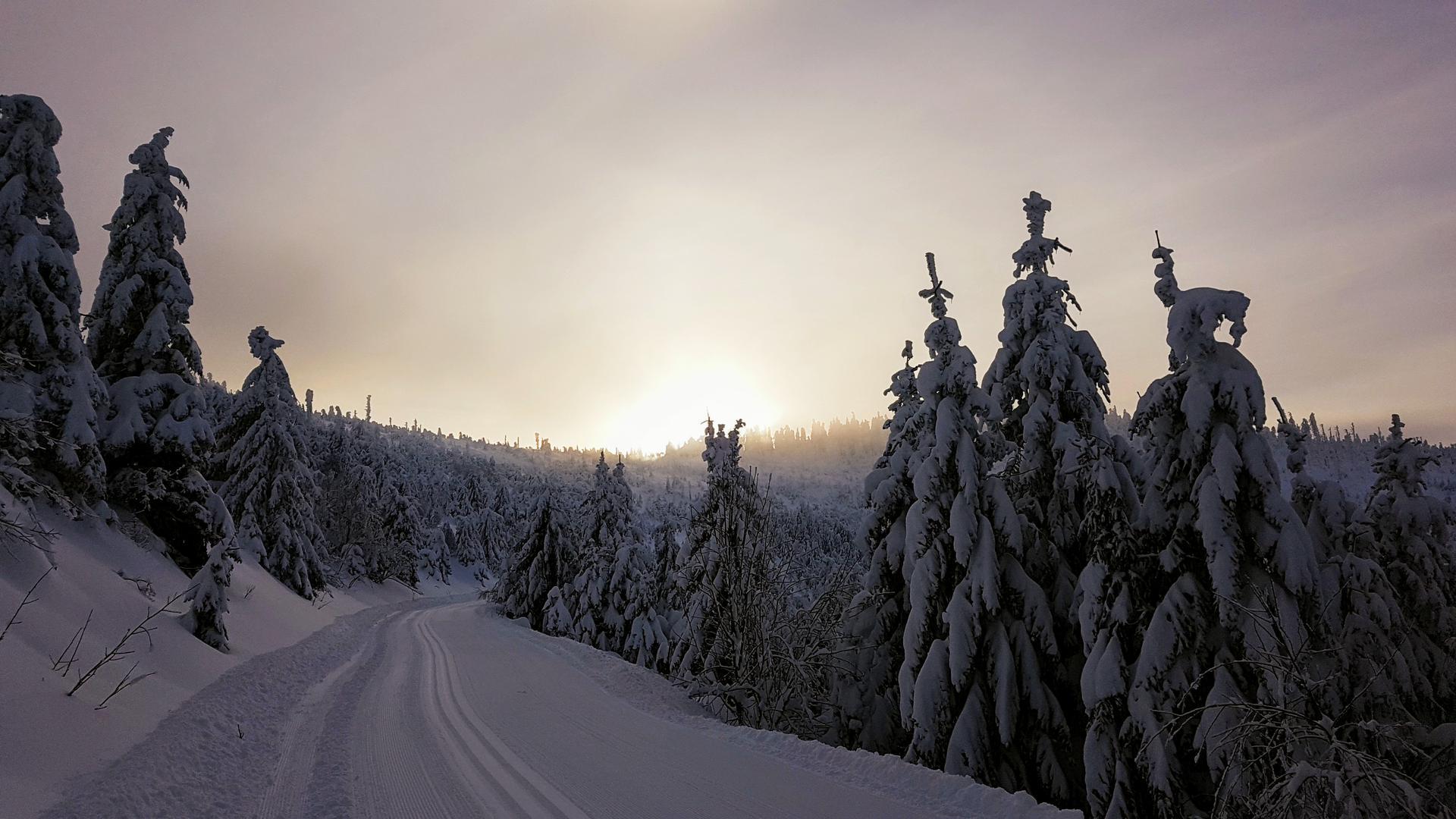"""Frühaufstehen lohnt sich: Auf dem Weg zur Darmstädter Hütte wurde Leserin Gerlinde Höll aus Bühl mit einem Sonnenaufgang hinter schneebedeckten Tannen belohnt. Ihr Fazit: """"Wir dürfen dankbar sein, dass wir solch eine schöne Landschaft haben."""""""