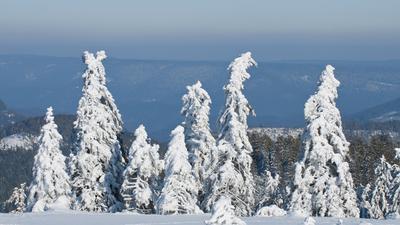 Blick von der Hornisgrinde im Nordschwarzwald über verschneite Tannen ins Tal