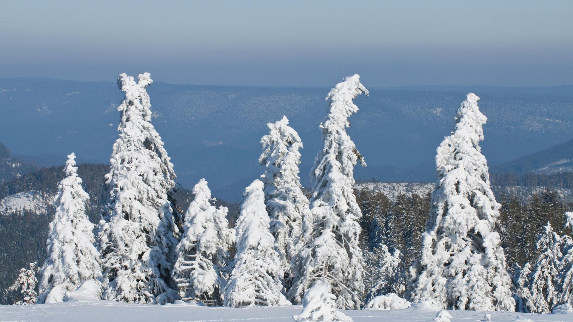 Hornisgrinde Schnee