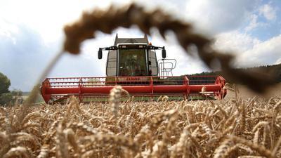 Weizen gilt als besonders sensibel bei Gift im Boden.