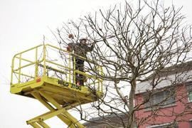 Ein Mann kürzt einen Baum.