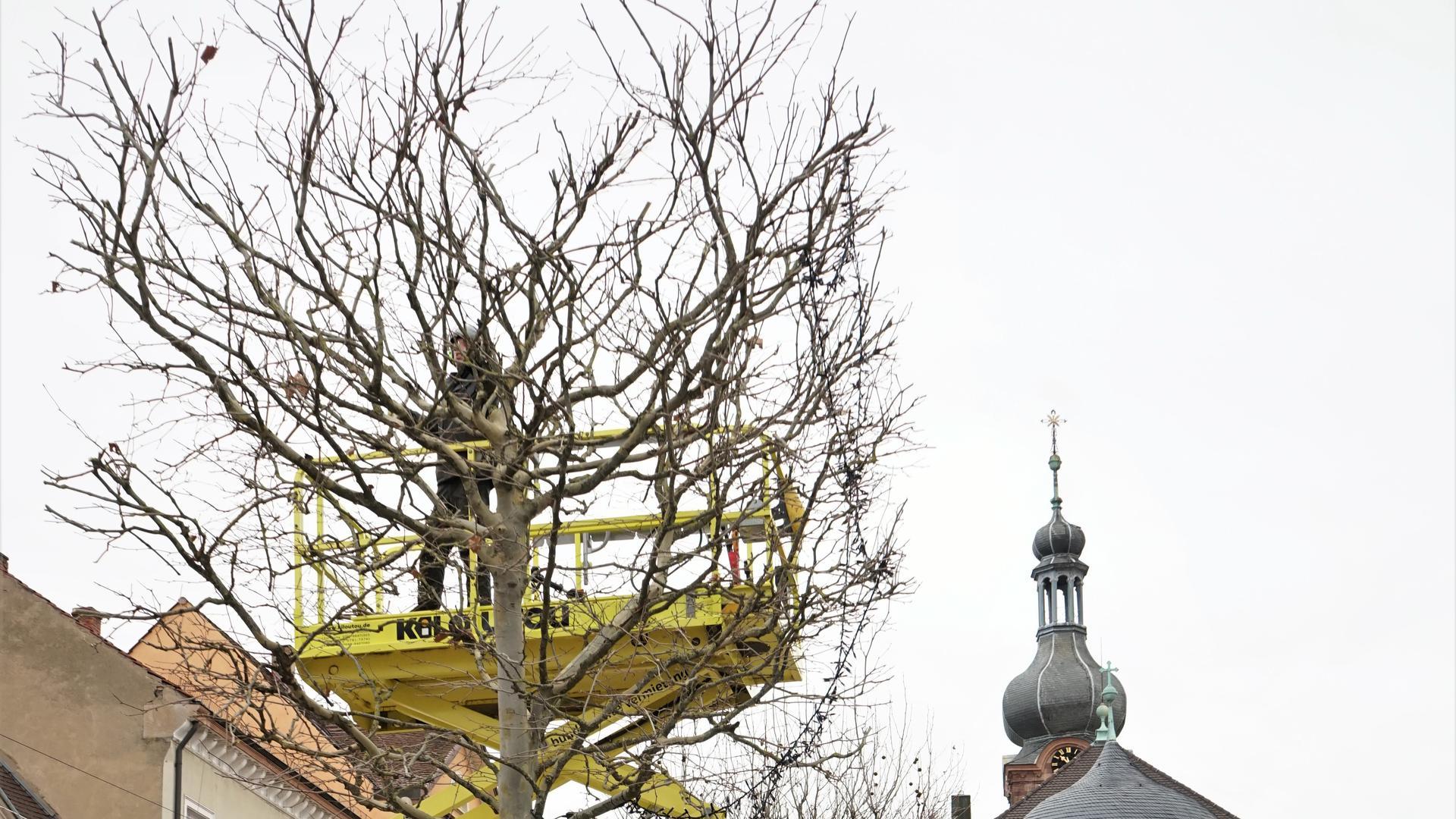 Baum, Mann, Platz