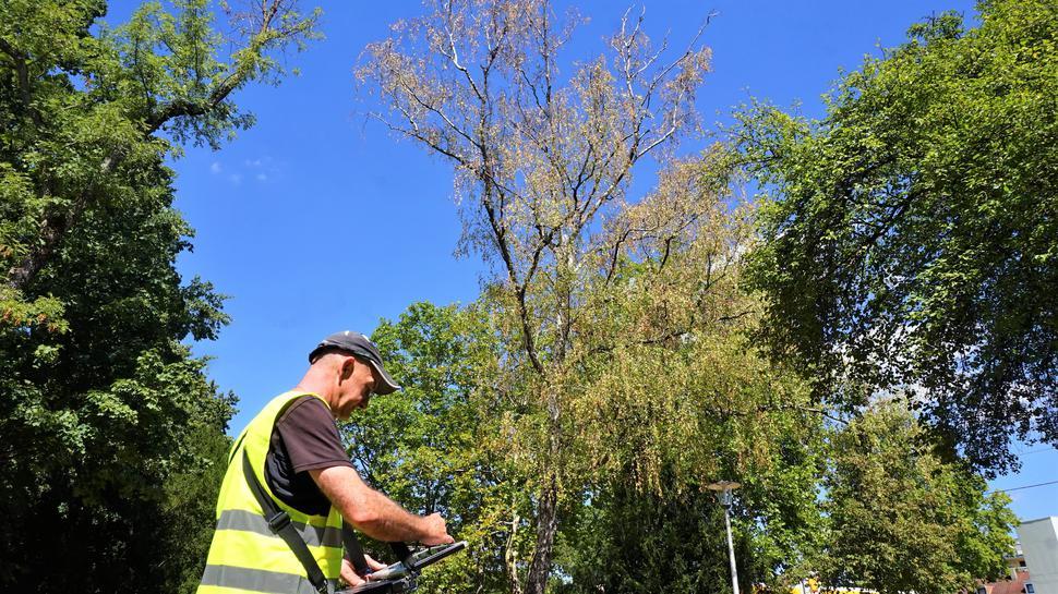 Baum fest im Blick: Baumwart Christoph Wambach ist derzeit auf Kontrolltour unterwegs. Insgesamt hat die Stadt drei Baumkontrolleure.
