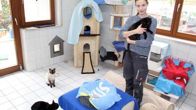 Eine junge FRau mit einer schwarzen Katze auf dem Arm, ein Katzenkörbchen in der Mitte und zwei weitere Katzen.
