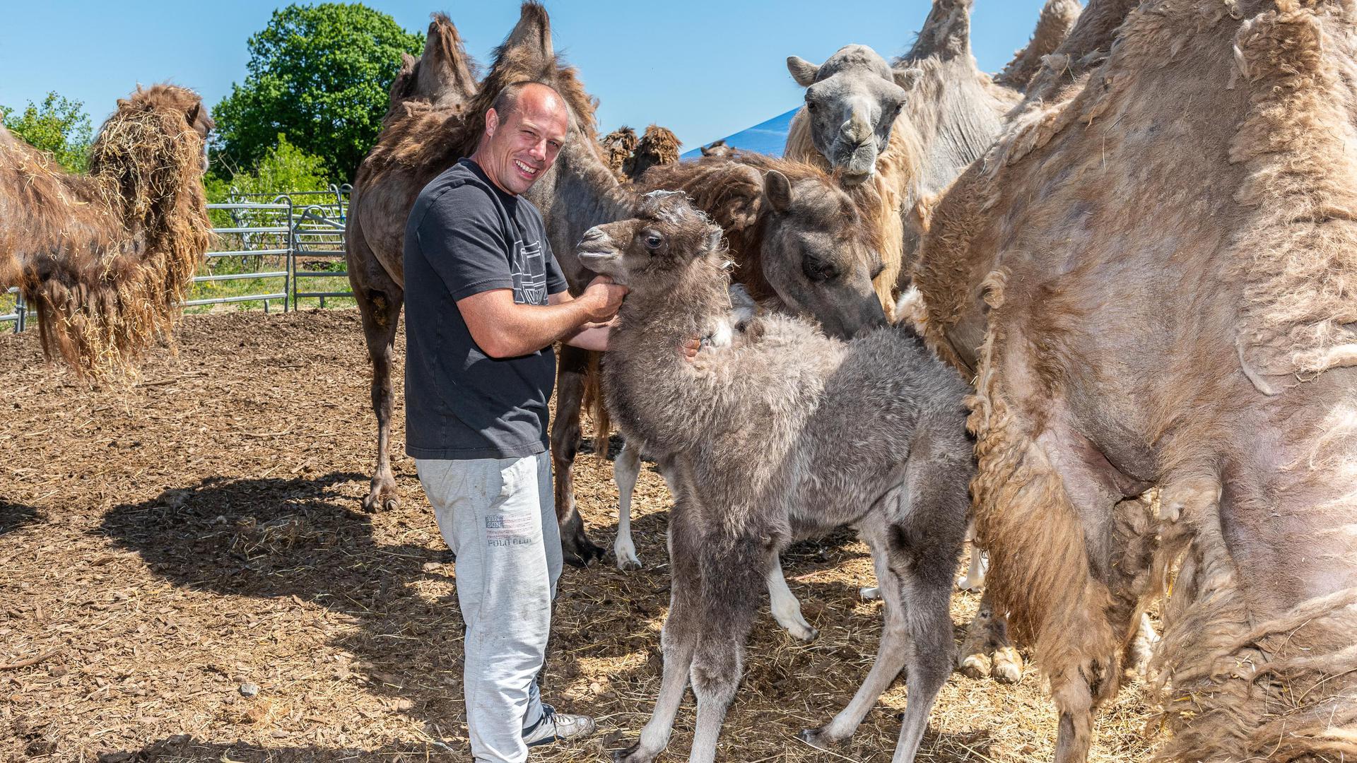 Der ganze Stolz des Familienunternehmens Bely ist der Nachwuchs bei den Sibirischen Kamelen. Der Zirkus bietet jetzt Tierbesichtigungen an.