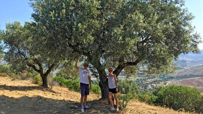 """Im Olivenhain des Landgutes """"Azienda Agricola Chiarello"""": Justyna Iemboli aus Bietigheim vertreibt mit Unterstützung ihres Mannes Toni italienisches Bio-Olivenöl aus der familieneigenen Ölmühle in Kalabrien. Offizieller Start ist am 1. März."""