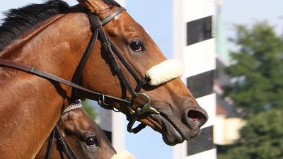 Zwei Pferde liefern sich ein Kopf-an-Kopf-Rennen.