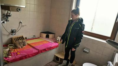 Vier flauschige Kaninchen bewohnen derzeit noch das ehemalige Badezimmer. Tierheimleiterin Silke Vierboom erklärt, wie es mit der Spende des Internet-Stars in eine Katzen-Krankenstation umgebaut werden soll.
