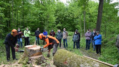 Eine Gruppe von Leuten schaut zwei Fachleuten in Sicherheitskleidung beim Baum fällen zu.
