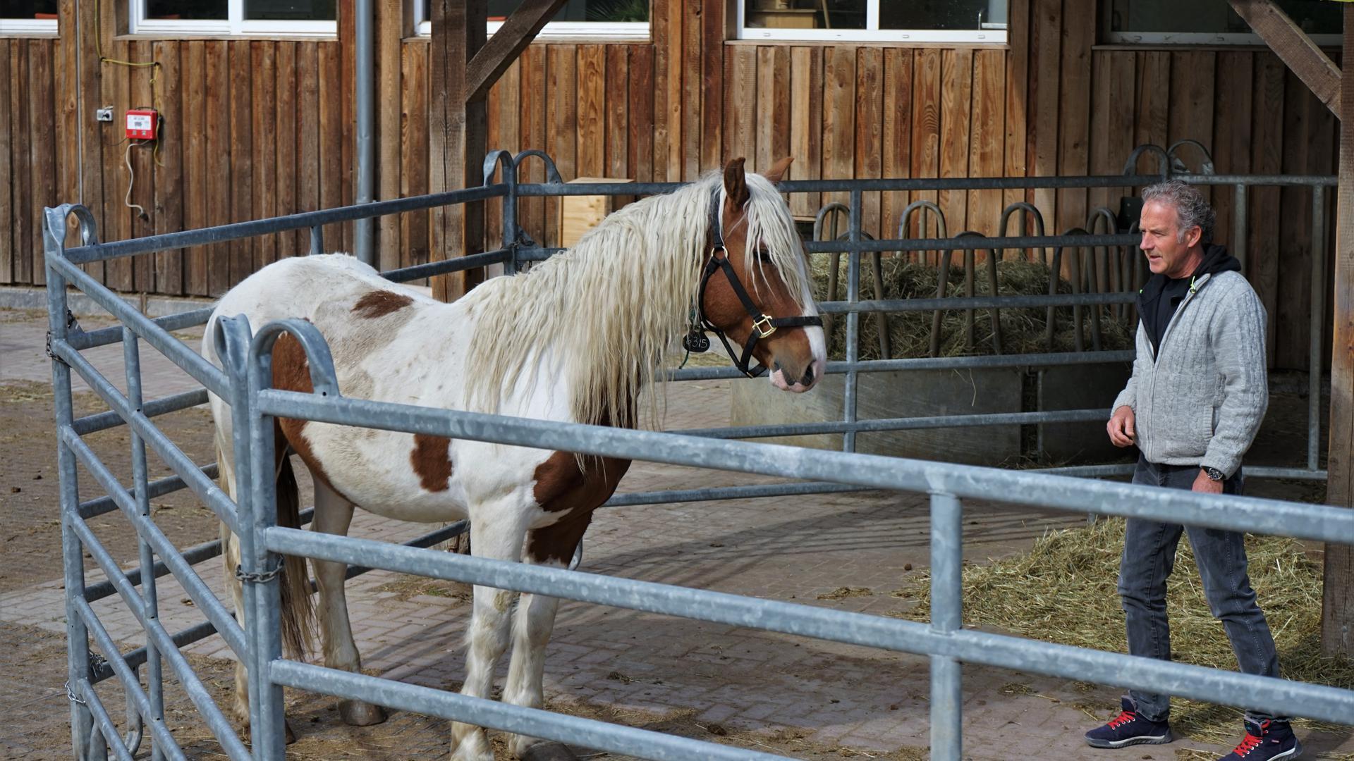Mann, Pferd