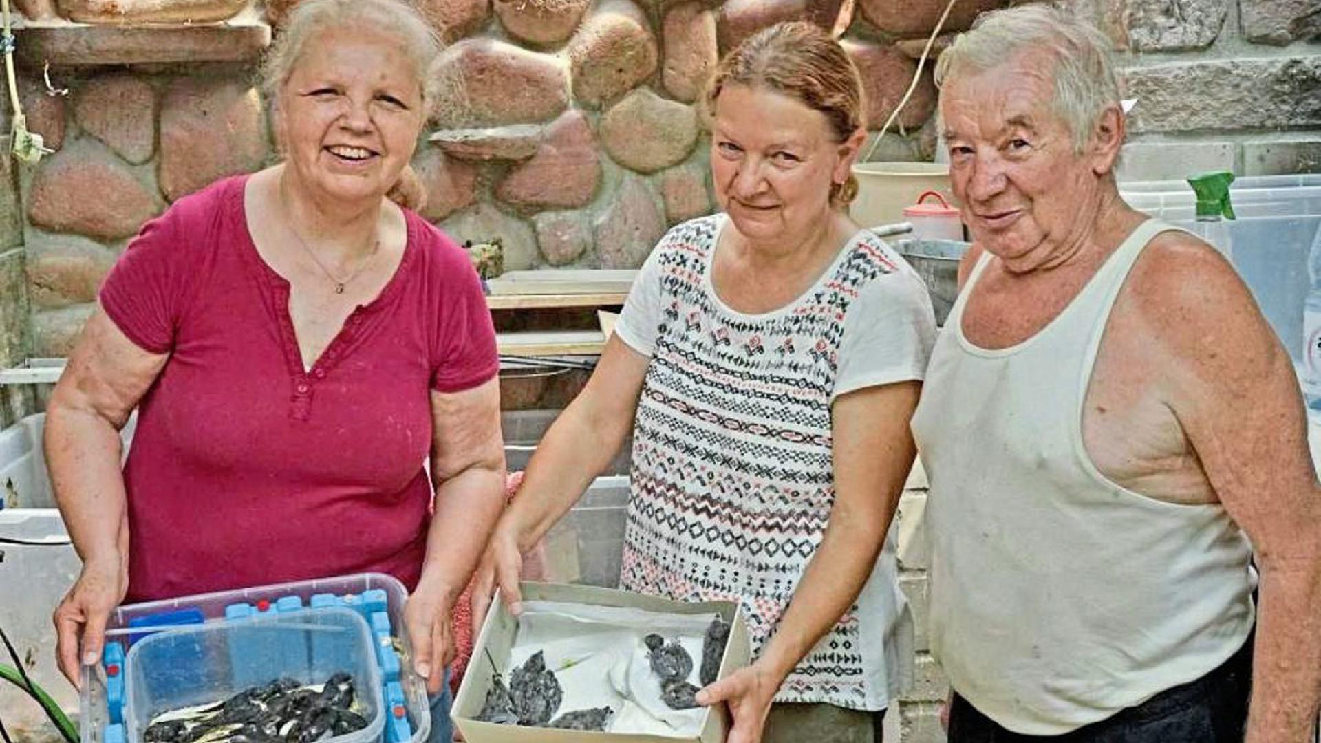 Helfende Hände: Verena (links) und Pierre Fingermann helfen gemeinsam mit Sibylle Wiebusch Tieren, die von Bürgern zu ihm gebracht werden.