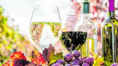 Weingläser stehen vor Reben.