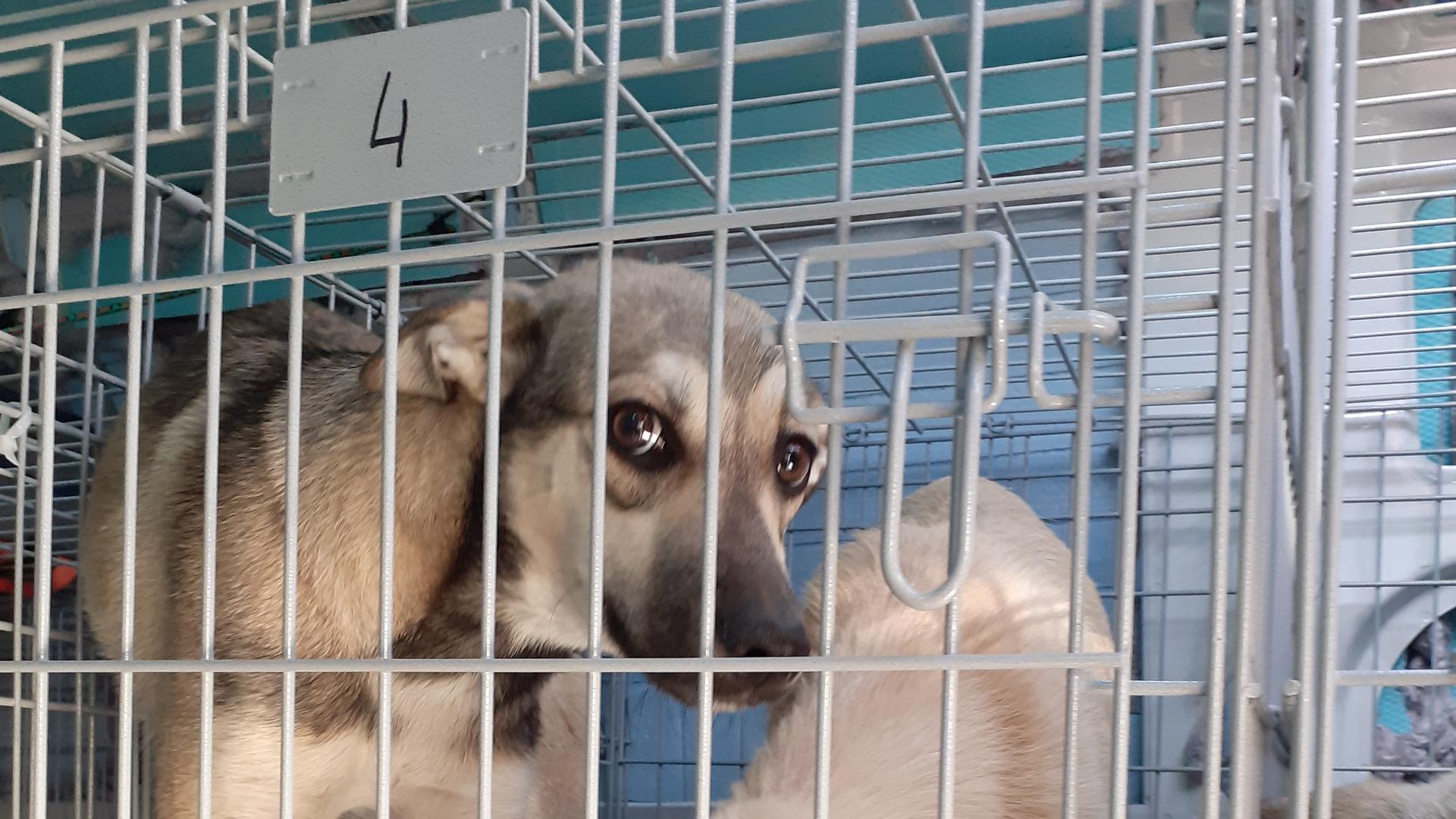 Die Karlsruher Polizei hat den Transporter gestoppt: Teilweise waren die Hunde zu zweit in den Boxen untergebracht, die ohnehin zu klein waren.