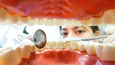 """ARCHIV - ILLUSTRATION - Eine Zahnarzthelferin sitzt am 31.03.2014 in einer Zahnarztpraxis in Hannover (Niedersachsen) hinter einem künstlichen, überdimensionierten Gebiss. (zu dpa""""Auf dem Land droht Mangel an Zahnärzten"""" vom 27.04.2017) Foto: Julian Stratenschulte/dpa +++(c) dpa - Bildfunk+++"""