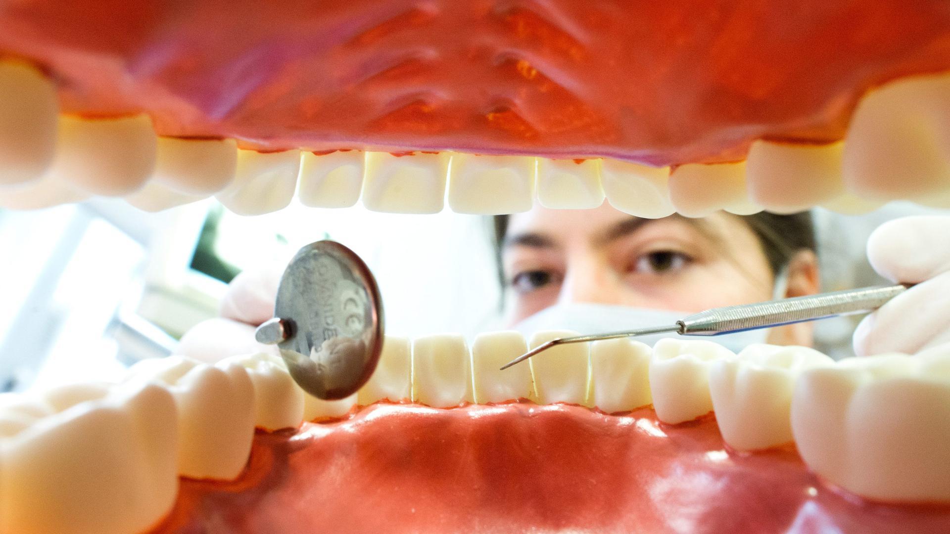 Eine Zahnarzthelferin sitzt in einer Zahnarztpraxis hinter einem künstlichen, überdimensionierten Gebiss.
