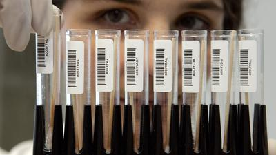 Eine Mitarbeiterin eines Labors für DNA-Analysen hält in Frankfurt/Main einen Ständer mit DNA-Speichelproben in der Hand (Foto vom 18.01.2005). Mehr als zwei Jahrzehnte nach dem Mord an einem Mädchen auf einem Reiterhof im baden-württembergischen Großbottwar ist der Täter am Freitag vom Landgericht Heilbronn zu lebenslanger Haft verurteilt worden. Die Ermittlungsbehörden waren erst im Jahr 2002 durch eine moderne DNA-Analyse auf die Spur des Angeklagten gekommen. Foto: Frank May dpa/lsw (zu dpa 0131 vom 28.01.2005) +++(c) dpa - Bildfunk+++