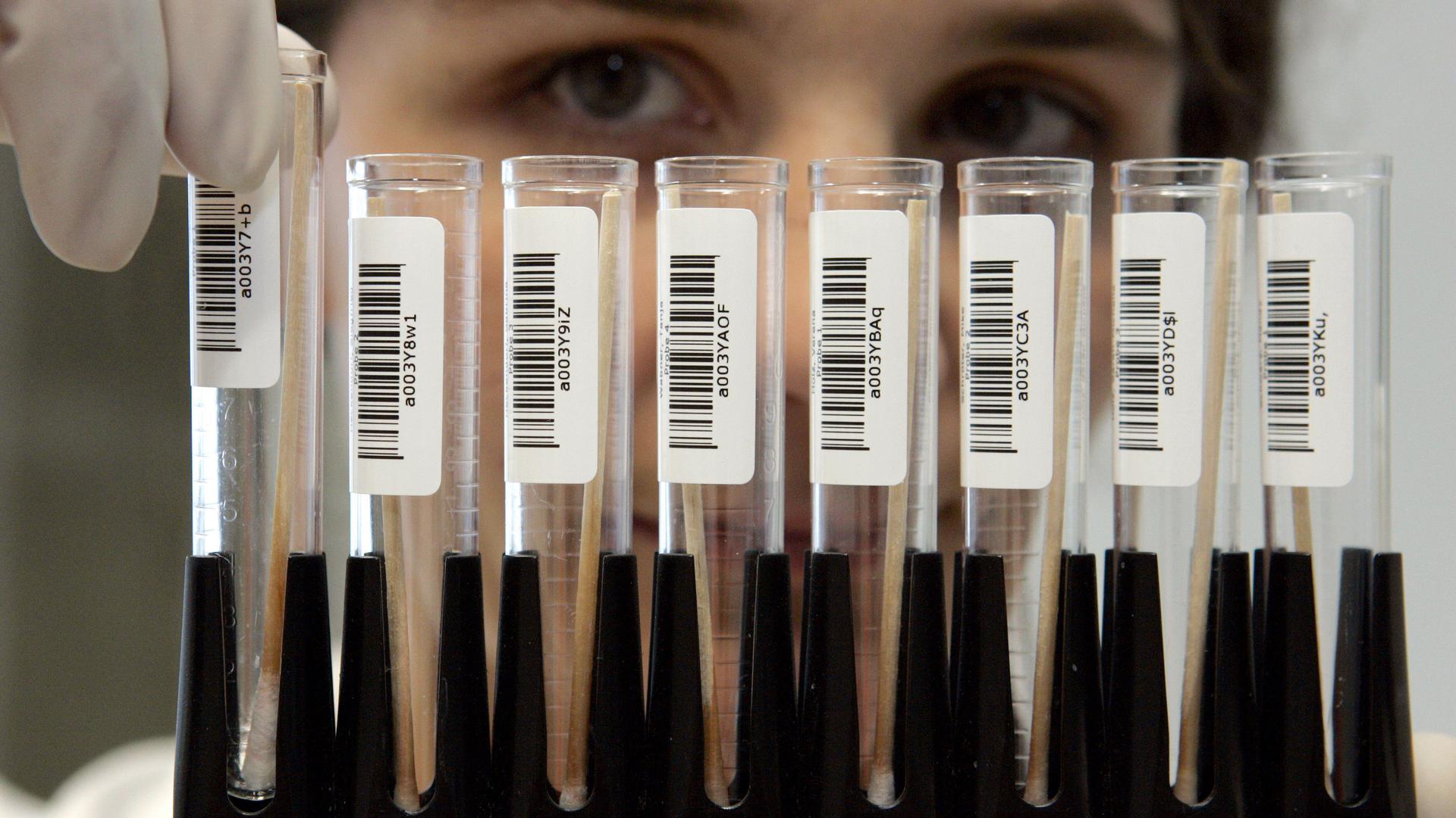 Eine Mitarbeiterin eines Labors für DNA-Analysen hält in Frankfurt/Main einen Ständer mit DNA-Speichelproben in der Hand (Foto vom 18.01.2005).