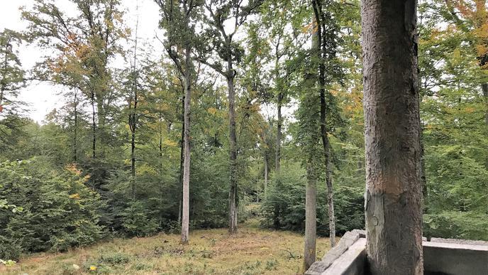 Hochsitz aus Holz, mit Blick auf eine Waldlichtung.