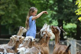 Ein Mädchen füttert eine Ziege im Tierpark Bretten
