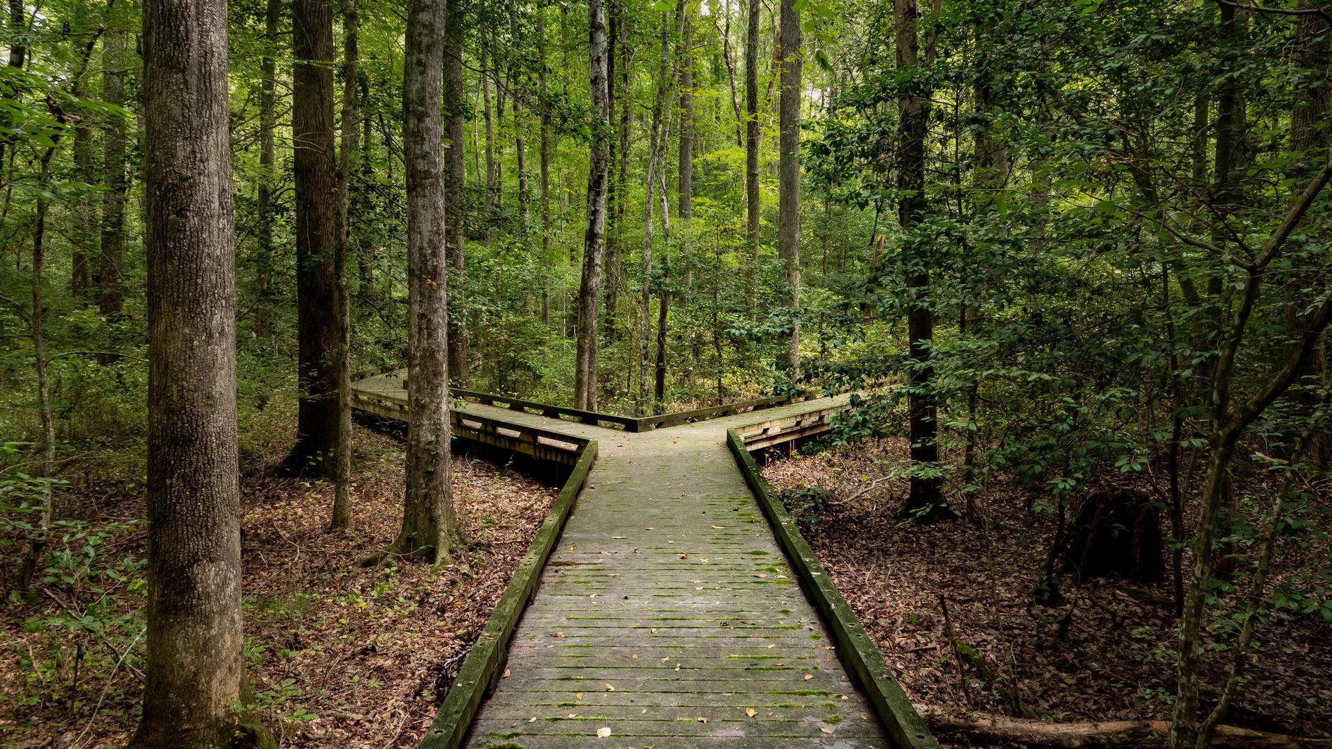 Ein Weg führt und durch den Wald.