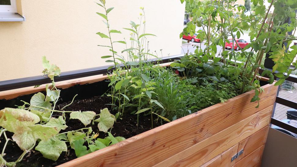Ansicht eines Hochbeets, das auf einem Balkon steht. Darin sind verschiedene Gemüsesorten gepflanzt.