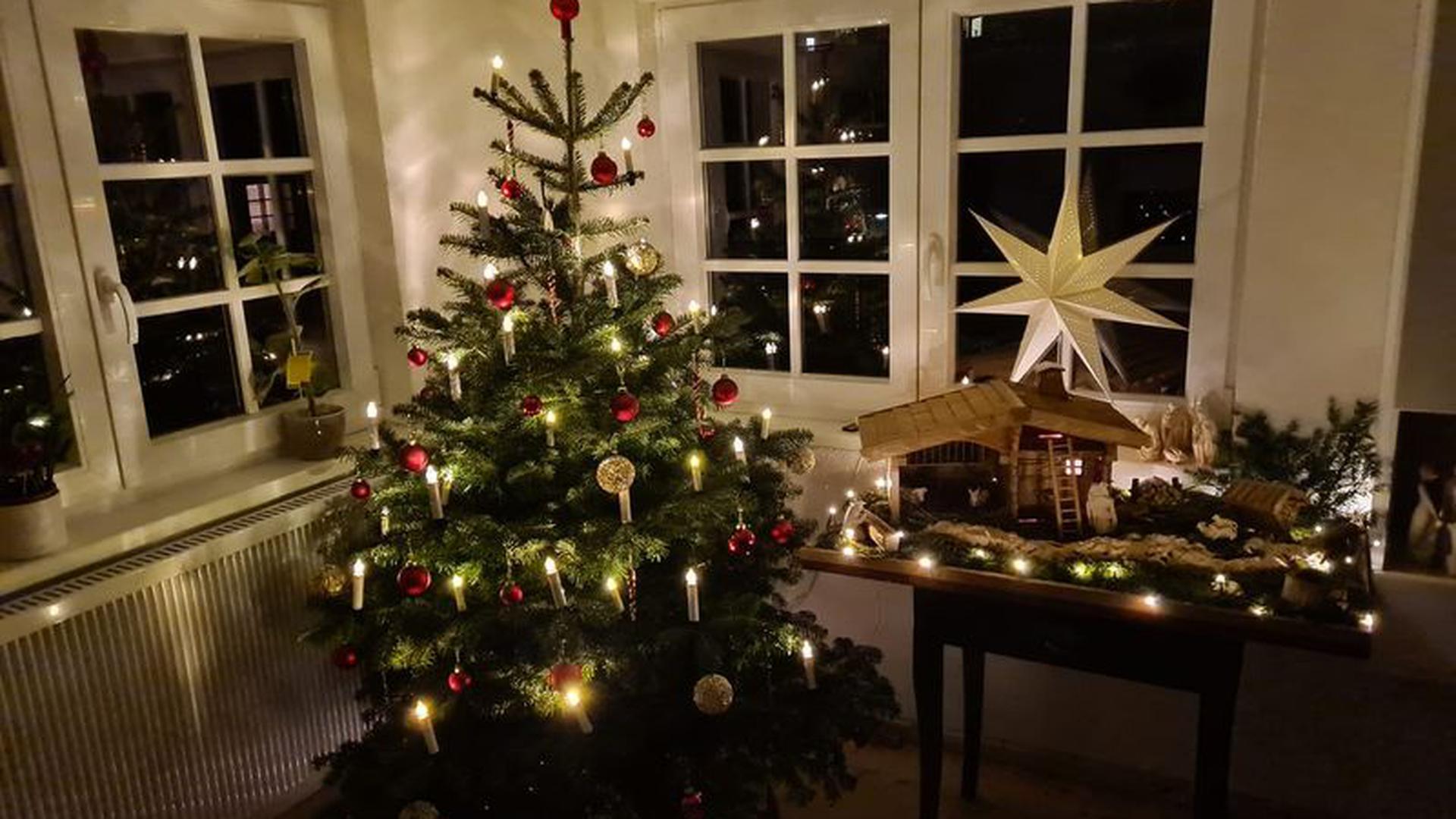 Ein rot geschmückter Weihnachtsbaum steht vor drei Fenstern. Rechts daneben ein großer Schmuckstern aus Papier über einer Weihnachtskrippe.