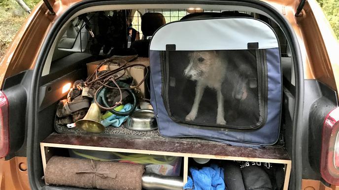 Blick in einen geöffneten Kofferraum mit Jagdhorn, Decken, zwei Hunden und anderen Utensilien.