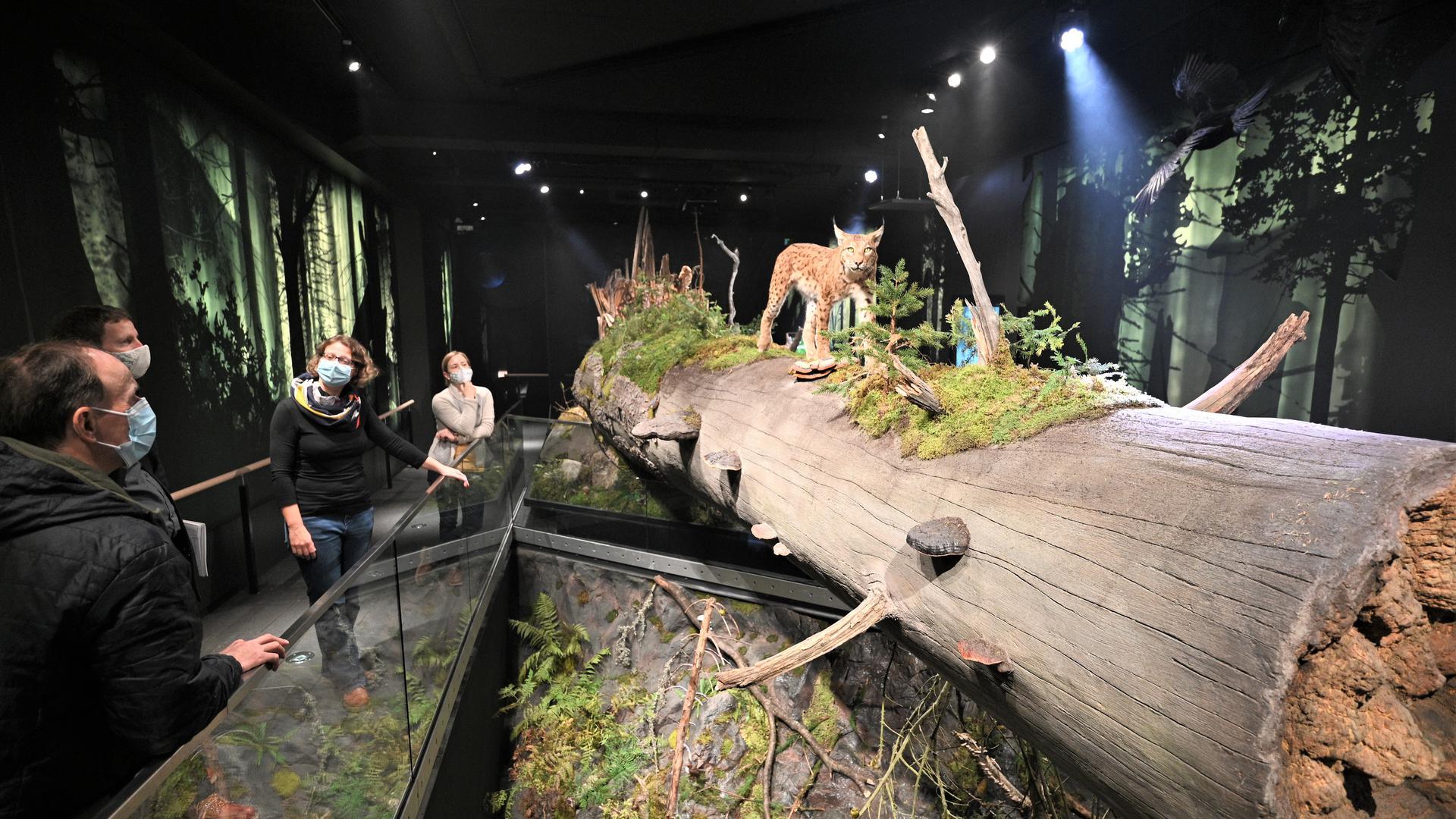 Blick in die Dauerausstellung: Diorama mit Luchs