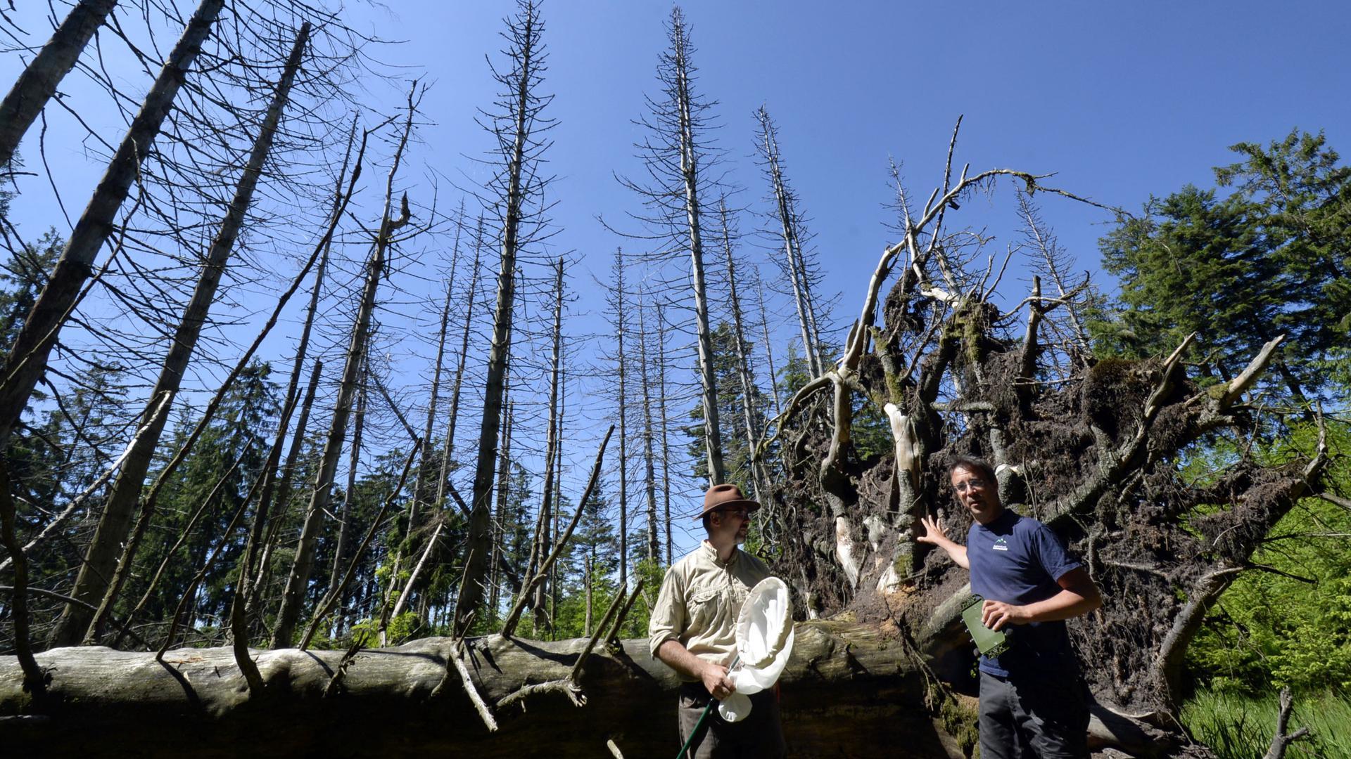 Jörn Buse, Sachbereichsleiter für wirbellose Tiere und Biodiversität im Nationalpark (links), und Marc Förschler, Leiter des Fachbereichs Ökologisches Monitoring, Forschung und Artenschutz.