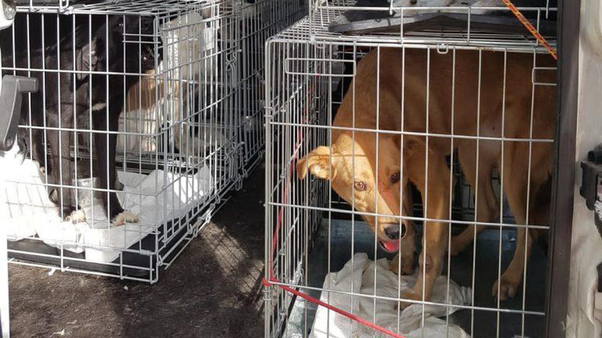 Die Kisten zu eng, die Versorgung nicht ausreichend: Ein Tiertransporter mit 27 Hunden wurde zuletzt bei Karlsruhe kontrolliert.