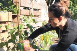 Katharina Schneider pflückt eine Paprika.
