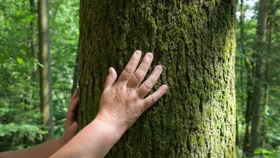 Jemand berührt einen Baumstamm.