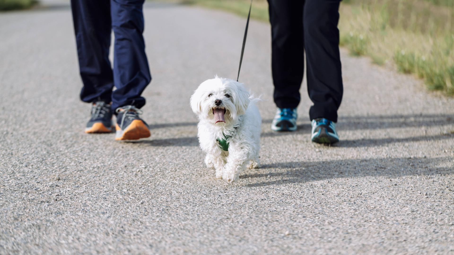 Helle Aufregung: Landwirtschaftsministerin Julia Klöckner möchte eine strengere Hundeverordnung umsetzen. Es geht um Transporte der Tiere und vorgeschriebenen Auslauf.