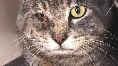 Eine Katze mit einem wunden Auge sitzt auf einer Straße in Mannheim.