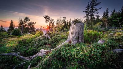 Die Natur Natur sein lassen: Um den Nationalpark in Baden-Württemberg wurde mit harten Bandagen gerungen. Heute haben auch die Gegner ihren Frieden mit ihm geschlossen.