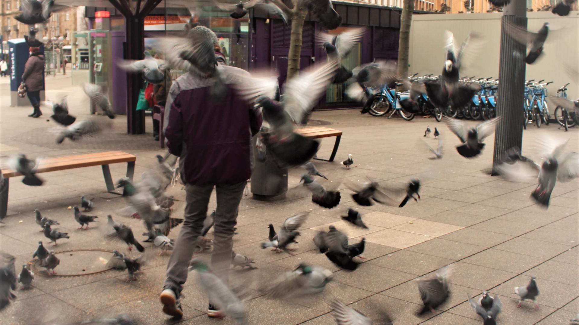 Essen für die Tiere: Besonders im Lockdown hungern die Stadttauben. In Heidelberg und andernorts im Land widersetzen sich Tierschützer dem städtischen Fütterungsverbot.