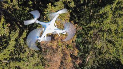 Eine Drohne fliegt über einem Waldgebiet, in dem eine vom Borkenkäfer befallene Fichte steht.