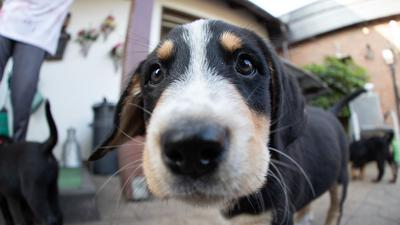 Ein Hundewelpe blickt in die Kamera.